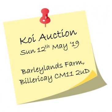 Sping Koi Auction – Sunday 12th May 2019